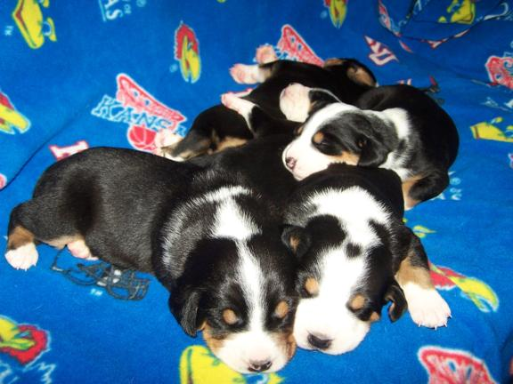 Blanca Babies